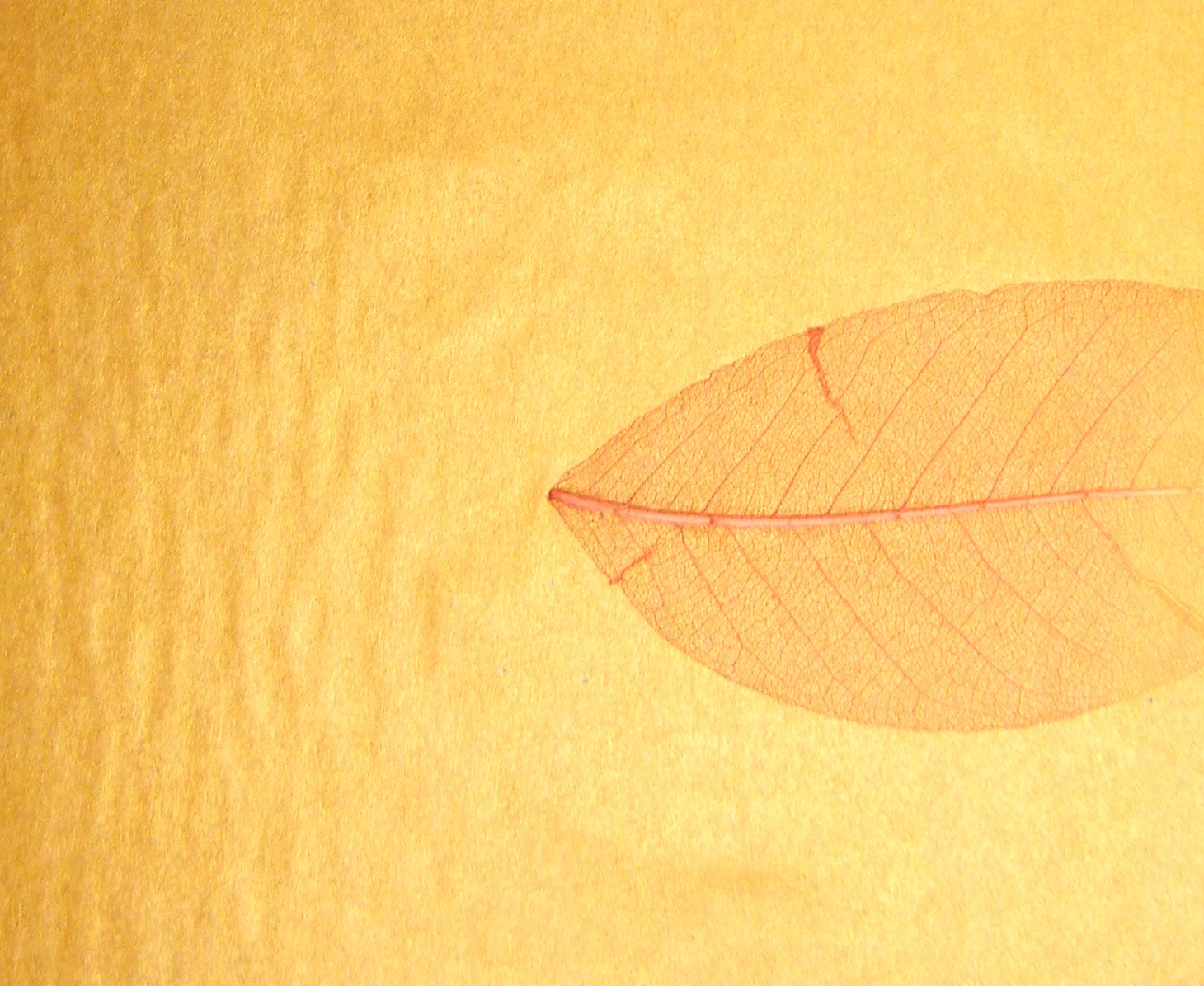 DSCN1643 otoño dorado
